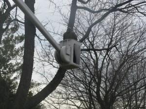 Tree Trucks 029