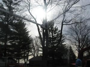 Tree Trucks 033