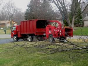 Tree Trucks 040