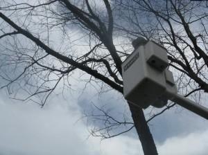 Tree Trucks 042