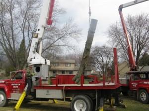 Tree Trucks 060