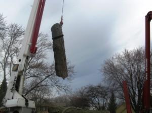 Tree Trucks 080